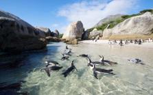 imm_5653_west-coast-rooibos-rock-art-fynbos-experience-cape-town.jpg.1340x0_default.jpg