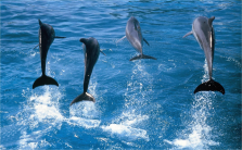imm_7643_dolphins.jpg